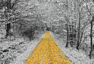 gold-footpath